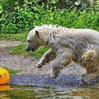 .. der gelbe Ball ...