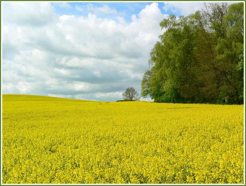 Der gelbe Frühling