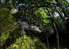 Der Gigant im Regenwald