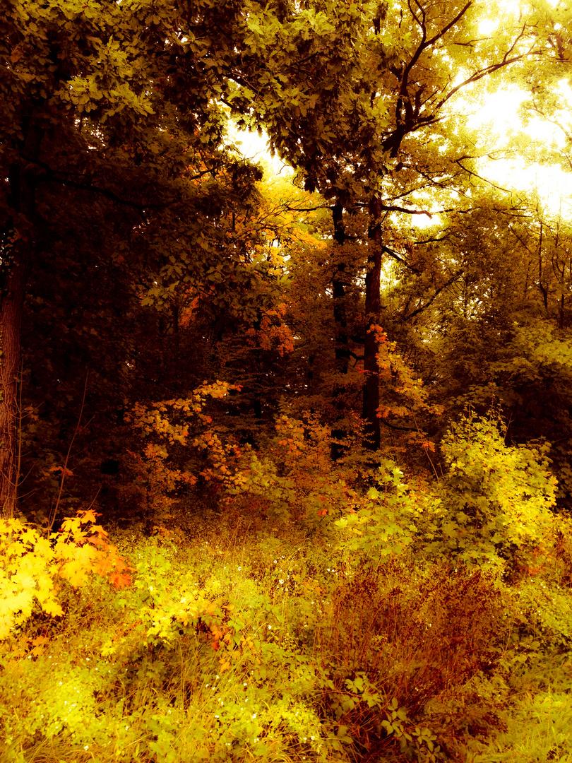 der goldene Herbst 3