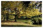 der goldene Herbst 4