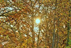 der goldene November