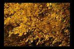 Der Goldrausch