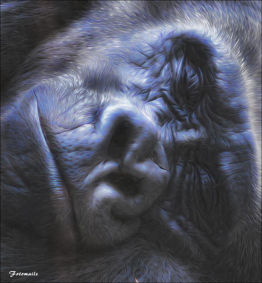 Der Gorilla Fritz.