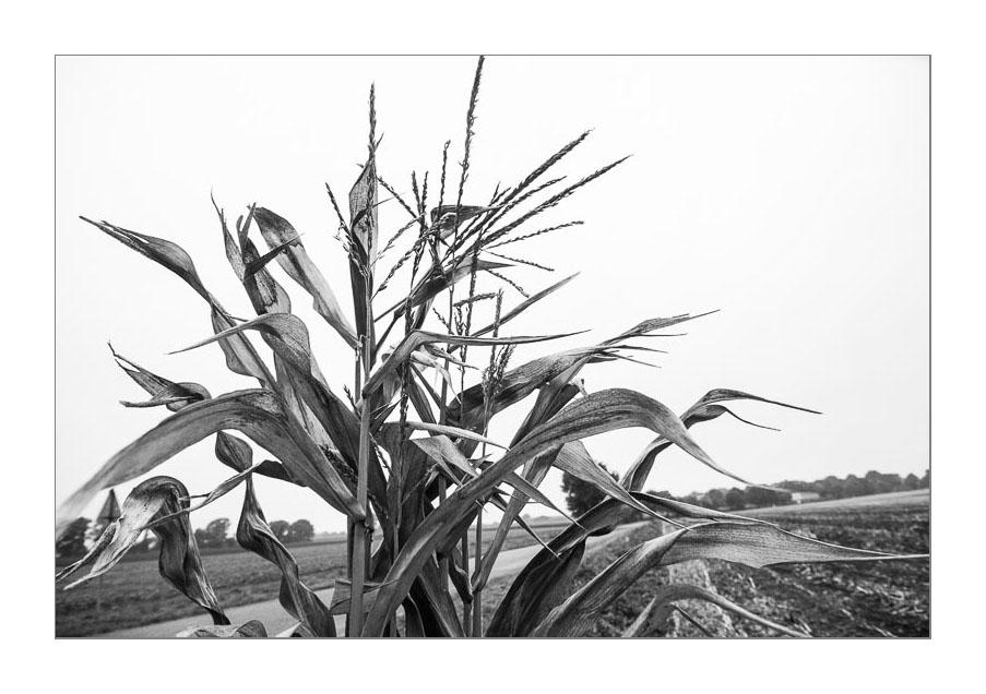 Der graue Herbst