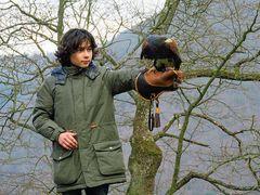 Der Greifvogel