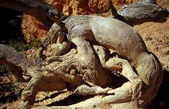 Der große Geist vom Bryce Canyon