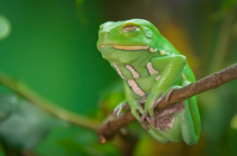 Der grüne Akrobat