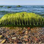 Der grüne Ostsee-Stein...