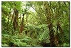 Der grüne Wald. Kein Durchkommen!