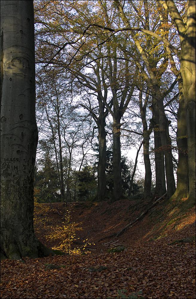 Der Haag in Liedberg