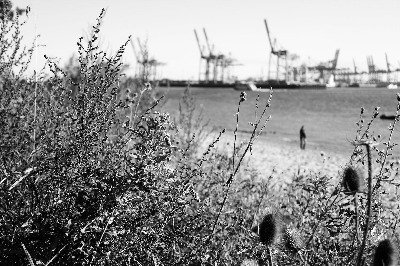 Der Hamburger Hafen ist irgendwie blumig