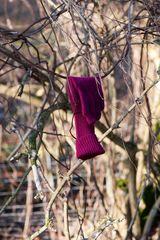Der Handschuhbaum...
