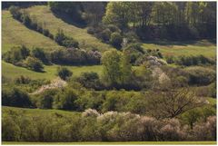 Der Hang zum Frühling... (Vorfrühlings-Komposition)