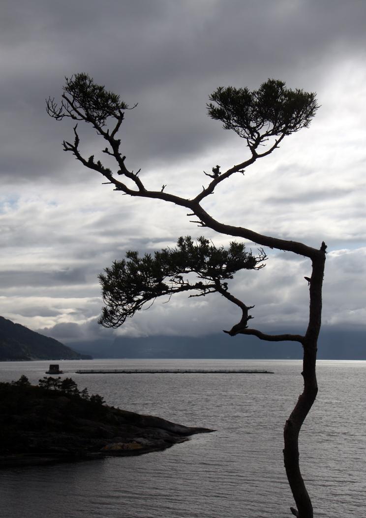 Der Hardangerfjord I