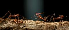 Der harte Weg der Ameisen