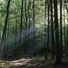 Der Harz im rechten Licht