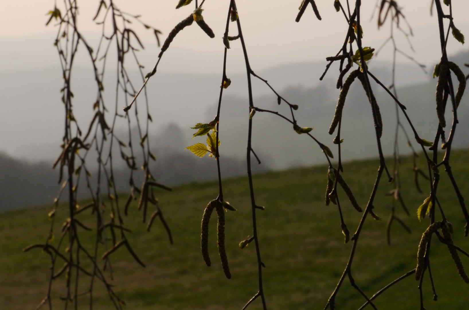 Der Hauch des Frühlings