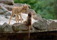 Tier - Kinder