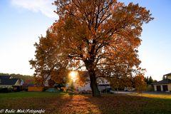 Der Herbst 2