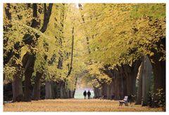 Der Herbst...