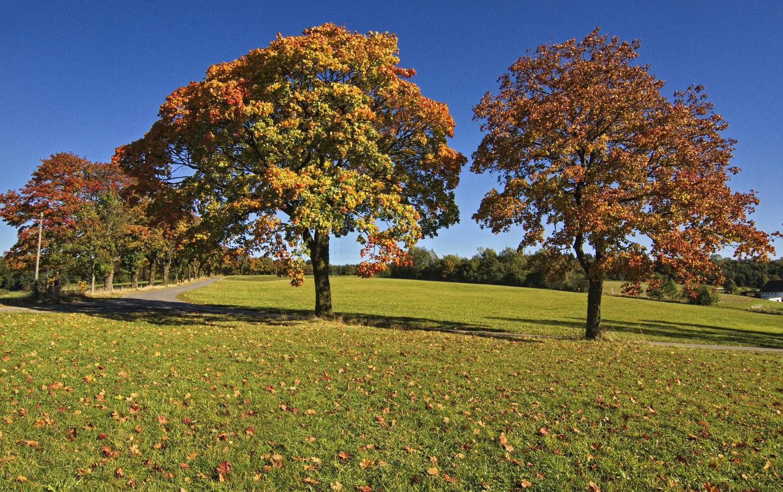 Der Herbst