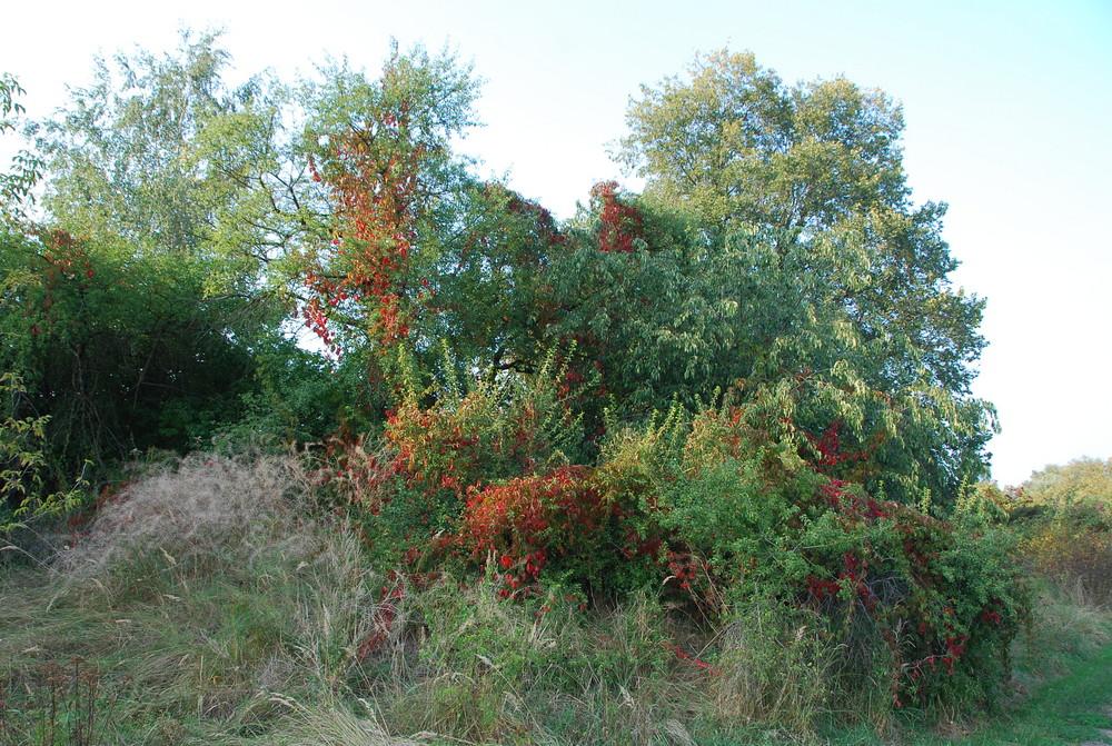 Der Herbst als Maler (1)