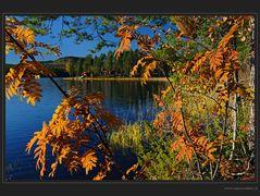 Der Herbst als Maler