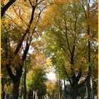 Der Herbst am Friedhof
