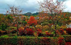 Der Herbst am Kurparkweiher ...