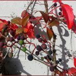 Der Herbst an der Wand