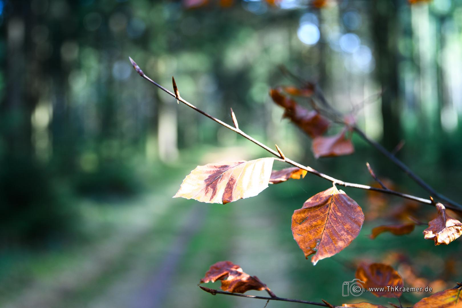 Der Herbst - D85_1890