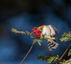 Der Herbst deckt den Tisch (4)