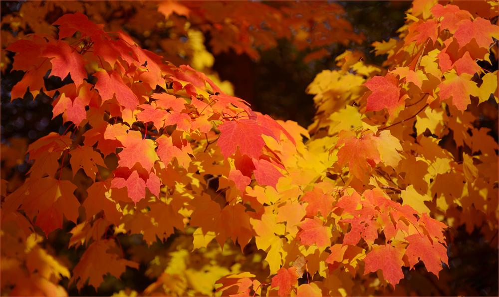 Der Herbst…,