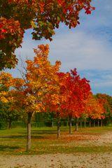 Der Herbst, eine wunderschöne Jahreszeit