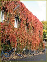 Der Herbst - ganz üppig; ein Bürohaus in Berlin - Kreuzberg