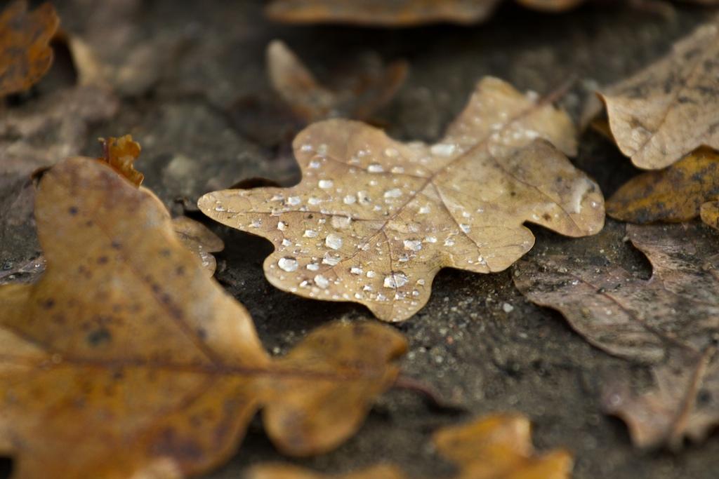 Der Herbst geht..