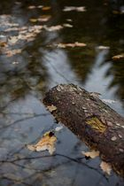 Der Herbst geht... 2