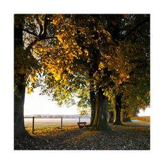 Der Herbst geht