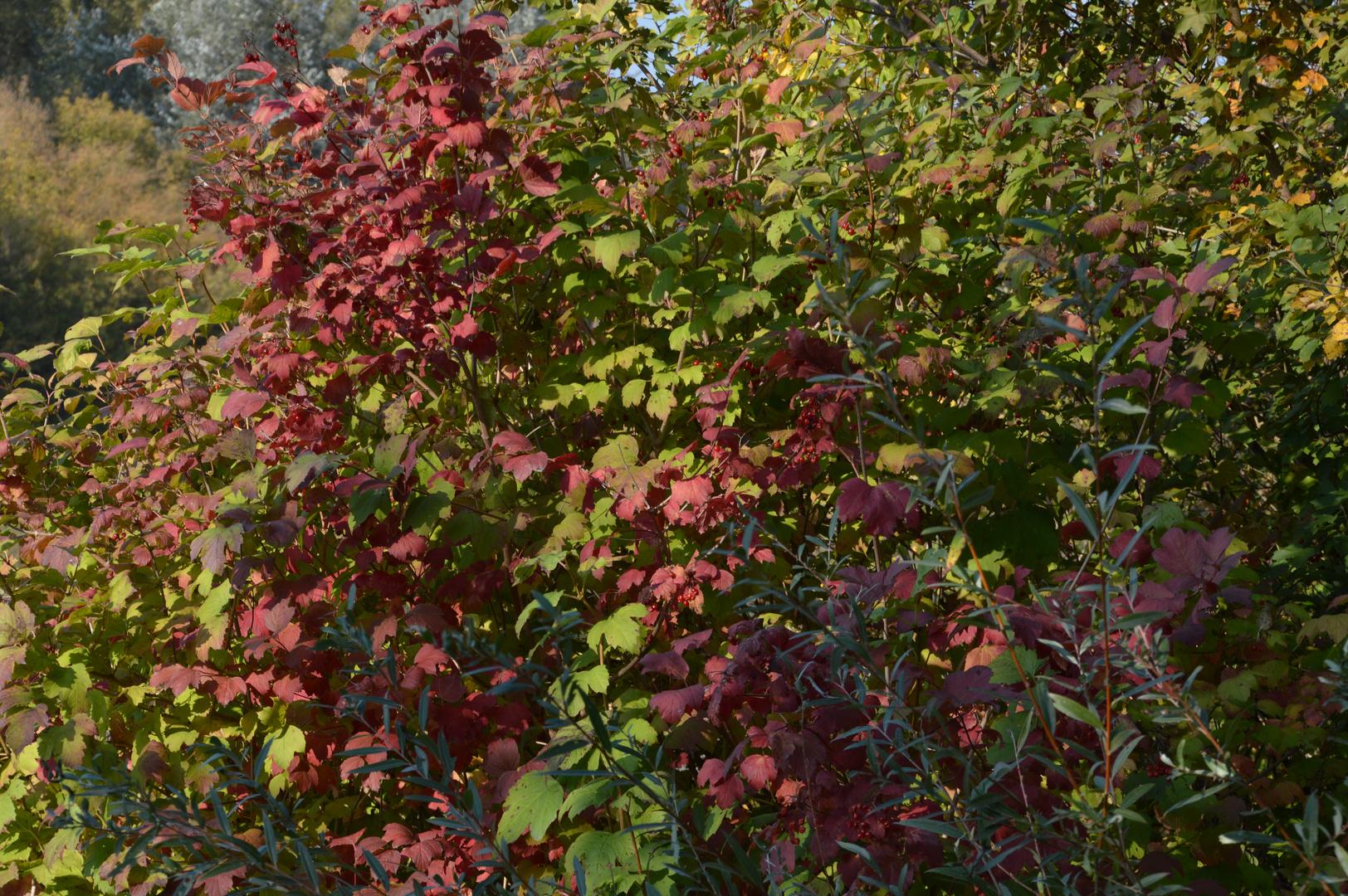 Der Herbst hält Einzug