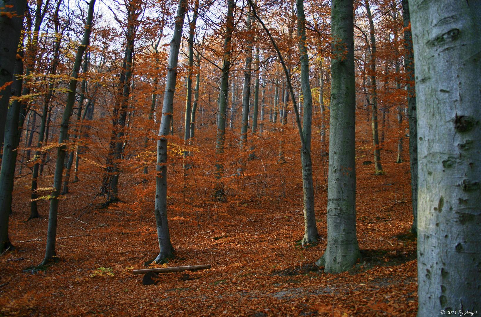 Der Herbst hält Einzug...