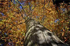 der Herbst hat Einzug gehalten ....