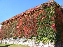 Der Herbst hat hier eine schöne Visitenkarte abgegeben