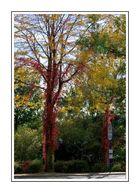 Der Herbst im Alltag