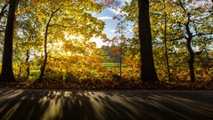 Der Herbst im Gegenlicht