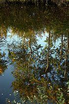 Der Herbst im Spiegel ....