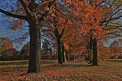 Der Herbst in der Lausitz 2