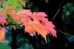 Der Herbst in Kanada