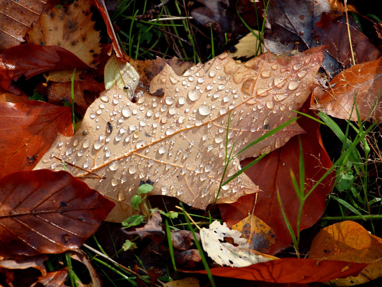 der Herbst in seiner schönsten Form