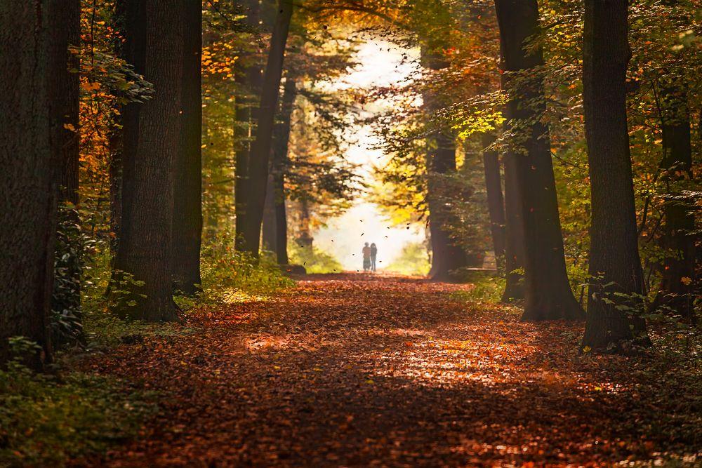 Der Herbst in seiner stillen Einsamkeit